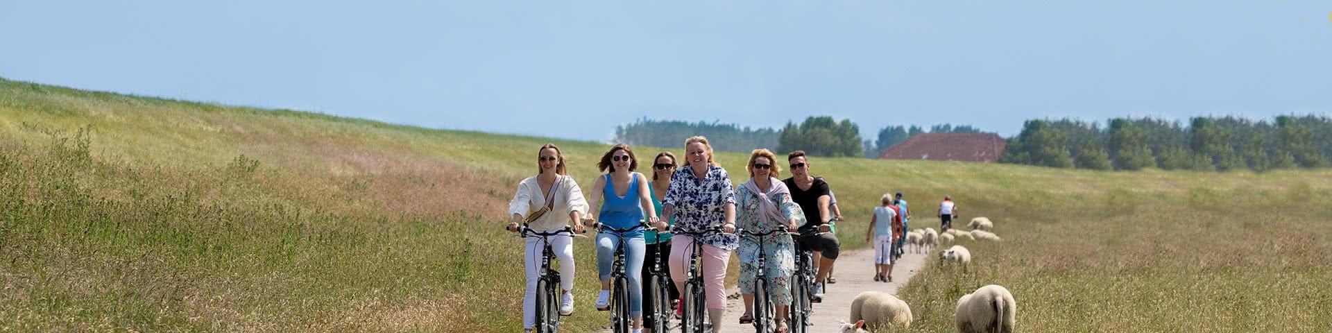 Eine Gruppe macht eine Fahrradtour an einem Deich an dem Schafe her laufen